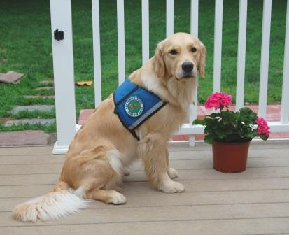 Therapy Dog Certification Ct Welcome To Therapy Dogs Of